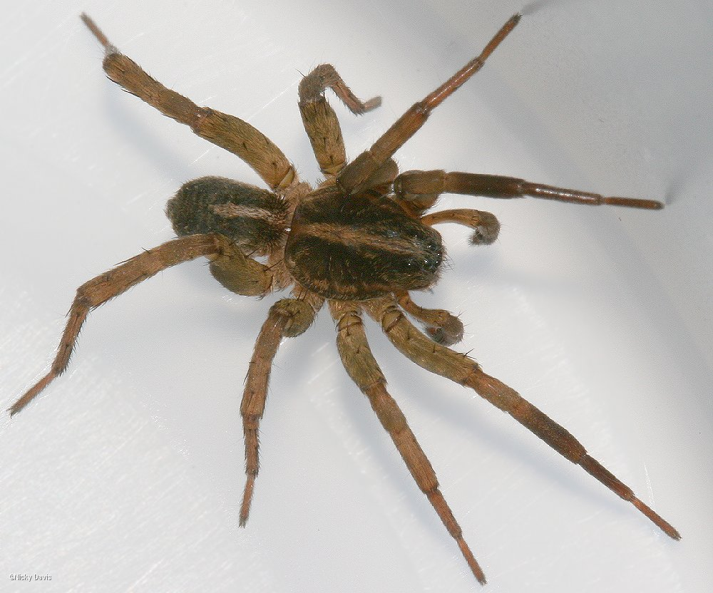 how to get rid of spiders in outdoor shed